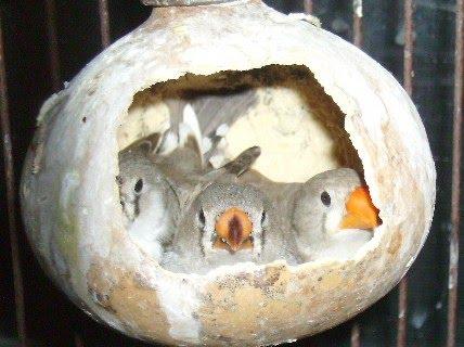 nido hecho con calabaza
