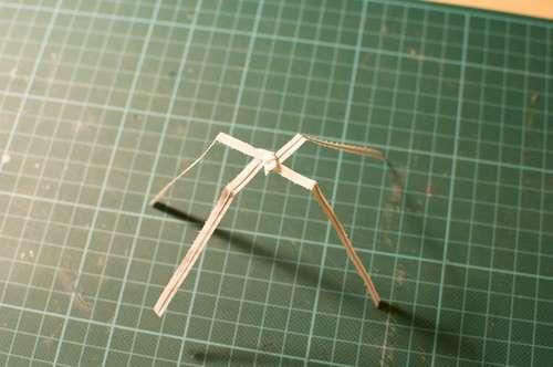 el insecto que camina sobre el agua