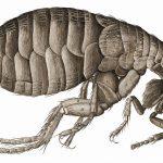 50 Curiosidades sobre los insectos. Reseña de Doce pequeños huespedes