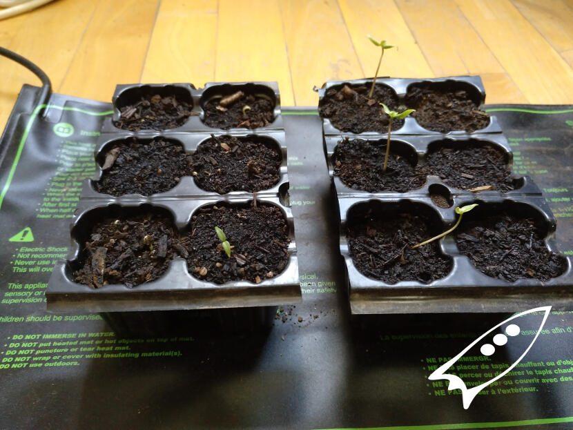 semilleros en manta termica