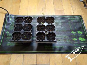 Semilleros germinando con manta calefactora