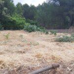 Cómo cultivar con acolchado o mulching y sin arar