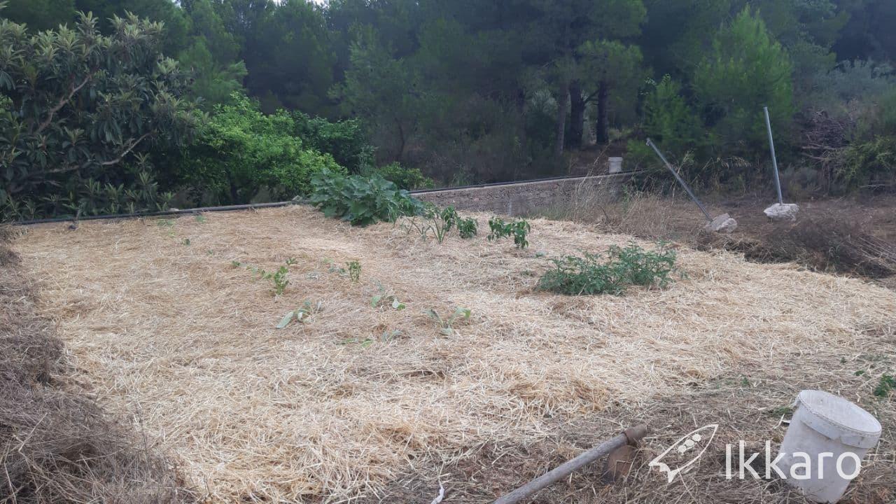 huerto terminado cultivar sin arar