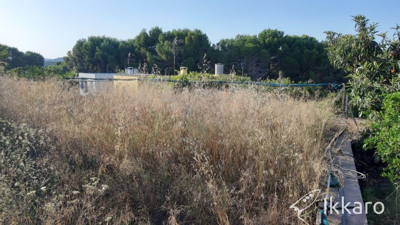 hierbas adventicias en huerto abandonado